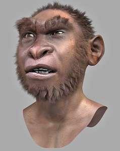 evolucionismo erectus